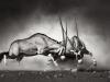 IR 1000 Animals Landscape Gallery