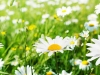 IR 500 Flowers Landscape Gallery