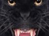IR 750 Animals Portrait Gallery