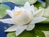IR 750 Flowers Landscape Gallery